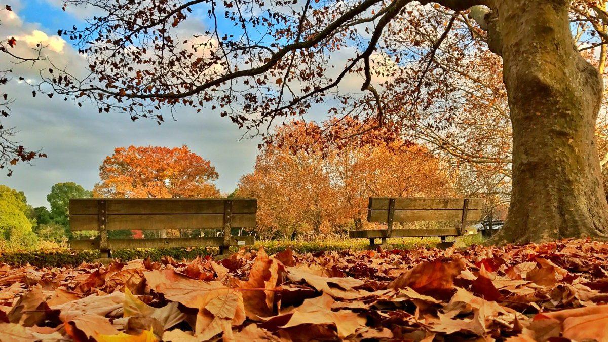 Yaprak Döken Ağaçlar