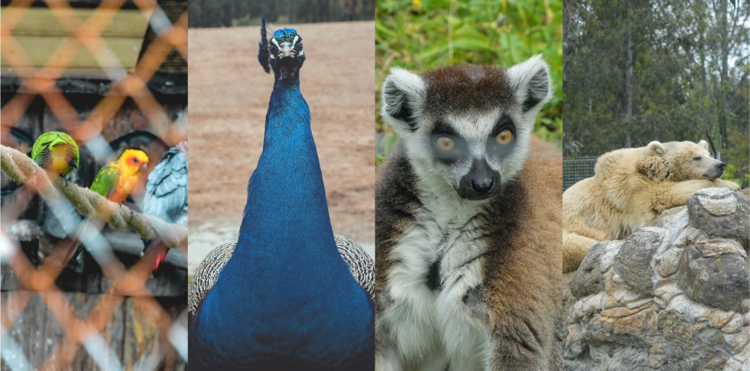 Hayvanat Bahçesinin Duygusal Çocukları