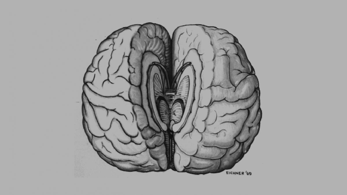 Ayrık Beyin ve Bilincin Bütünlüğü